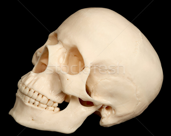 Human skull isolated on black background Stock photo © pzaxe