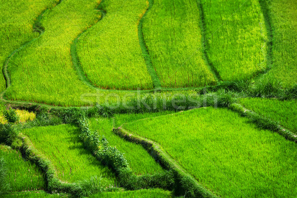 Teraced Rice Fields Stepping Down from the Hillside in Asia Stock photo © pzaxe