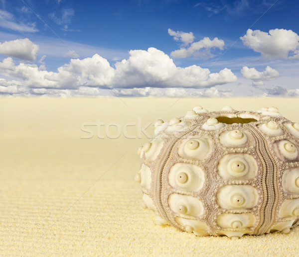 Shell of the sea urchin on beach Stock photo © pzaxe