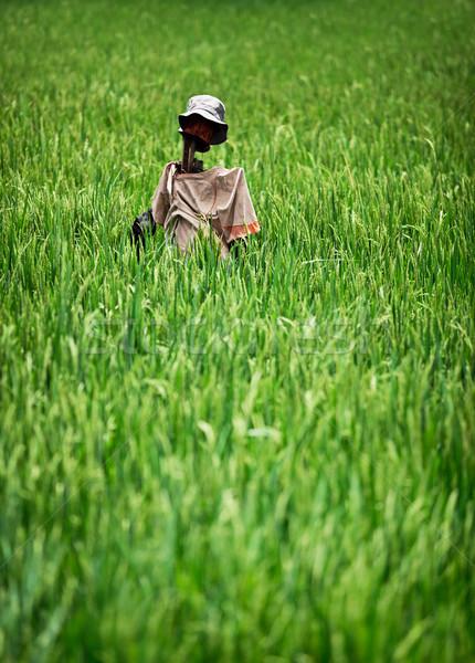 Eigengemaakt rustiek vogelverschrikker rijstveld Indonesië grunge Stockfoto © pzaxe