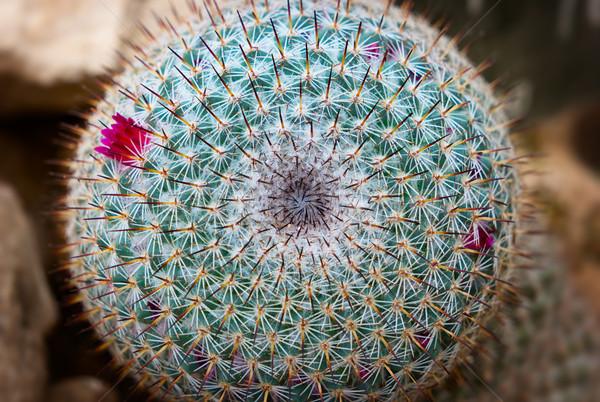 細部 サボテン 抽象的な 庭園 砂漠 ストックフォト © pzaxe