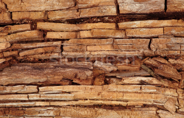 Rotten wooden background Stock photo © pzaxe