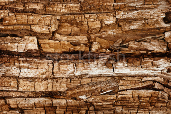 Completely rotted wood Stock photo © pzaxe