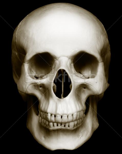 Koponya izolált sötét emberi arc terv Stock fotó © pzaxe