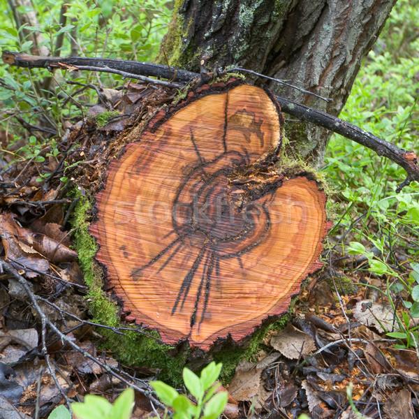 Kesmek huş ağacı ahşap ağaç orman doğa Stok fotoğraf © pzaxe