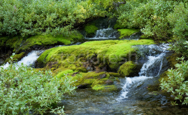 Beautiful landscape Stock photo © pzaxe