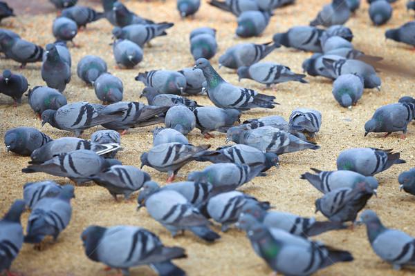 Piazza urbana città natura blu Foto d'archivio © pzaxe