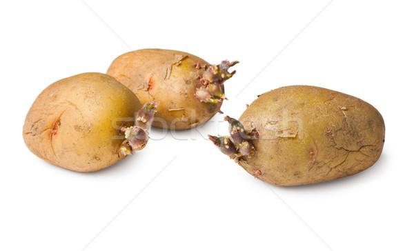Potato seeds - three tubers on white Stock photo © pzaxe