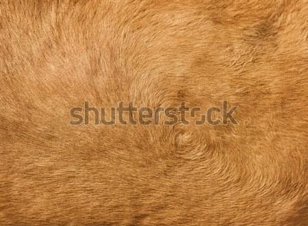 Barna teve haj állat természetes háttér Stock fotó © pzaxe