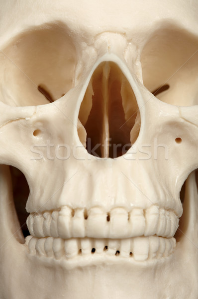 Facial part of skull close up Stock photo © pzaxe