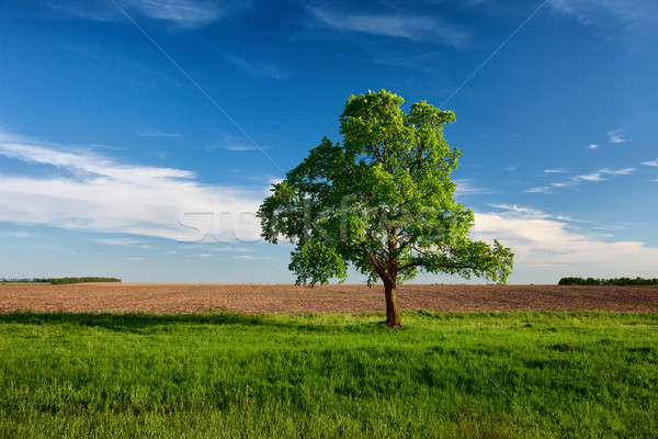 Lonely tree on near the arable land Stock photo © pzaxe