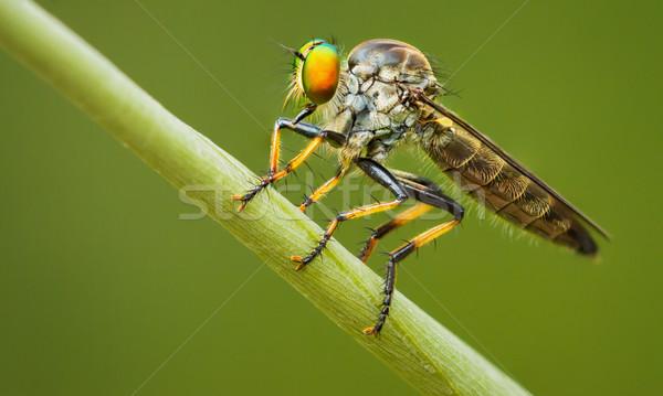 грабитель лет лезвия трава Таиланд красоту Сток-фото © pzaxe