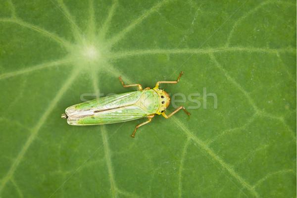 Vert insecte faible usine feuille forêt Photo stock © pzaxe