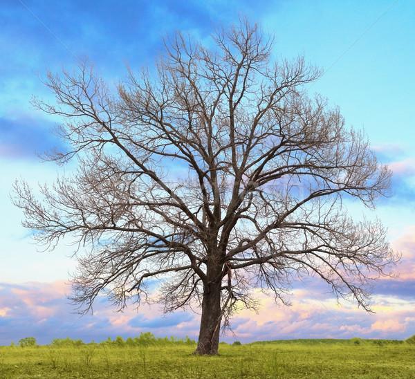Eik bladeren veld wolken gras Stockfoto © pzaxe