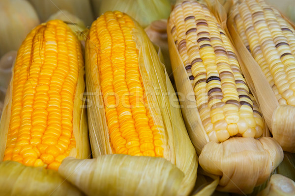 Corn on the Cob for Sale at Vendor's Stall Stock photo © pzaxe