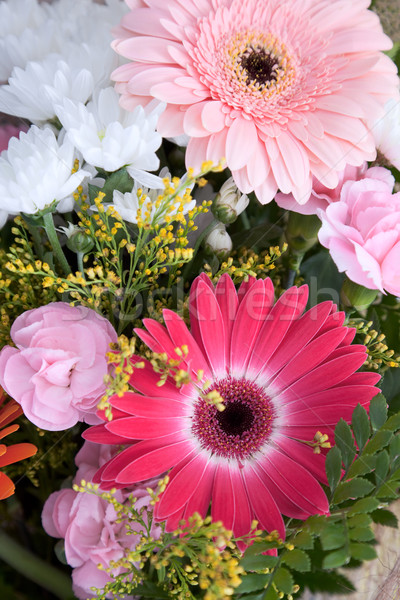 Big bouquet with chrysanthemums for a celebratory card Stock photo © pzaxe