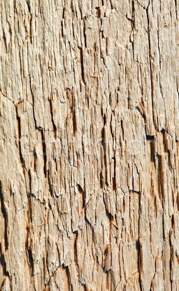 Rot hout oppervlak textuur foto Stockfoto © pzaxe