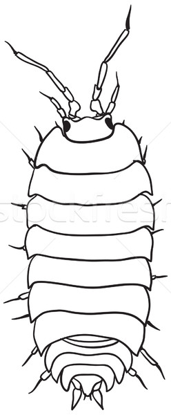 Woodlouse - monochrome vector drawing Stock photo © pzaxe