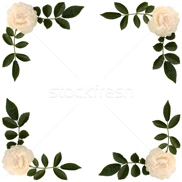 Frame of sprigs  tea-rose Stock photo © pzaxe