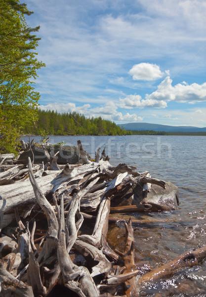 Groot hoop rot hout bank meer Stockfoto © pzaxe
