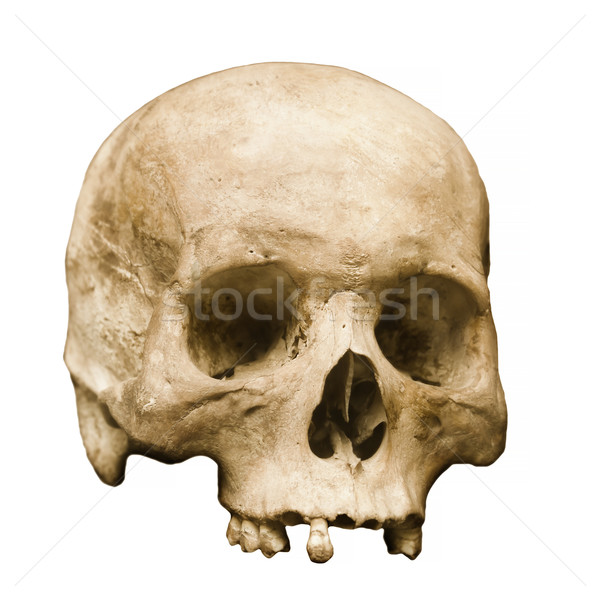 Menselijke schedel ingesteld witte gedetailleerd Stockfoto © pzaxe