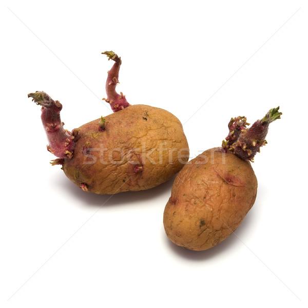 Seed potato Stock photo © pzaxe