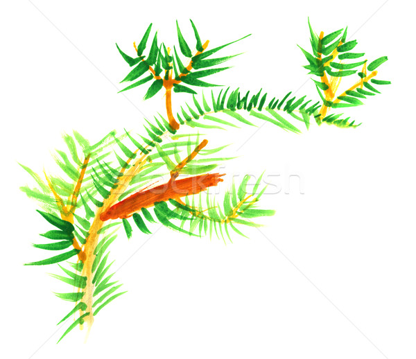 Primitive children's drawing -  fur-tree branch Stock photo © pzaxe