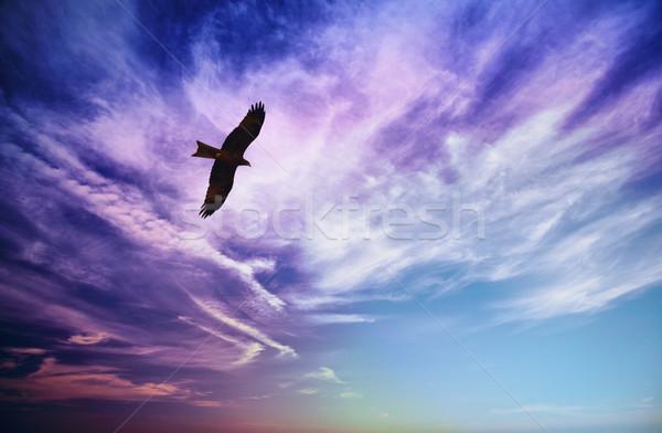 Vogel buit vliegen Blauw bewolkt hemel Stockfoto © pzaxe