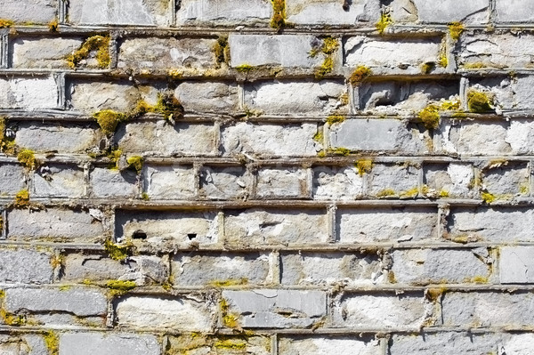Wall covered with moss with decayed bricks Stock photo © pzaxe