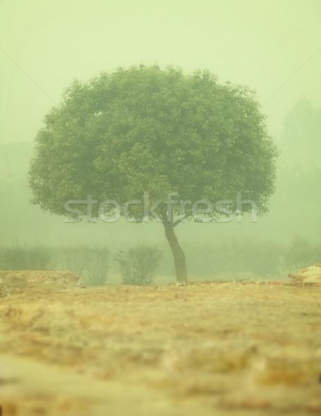 Arbre matin brouillard smog une Inde Photo stock © pzaxe