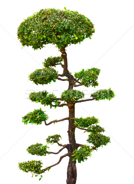 Bonsai tree isolated over white Stock photo © pzaxe