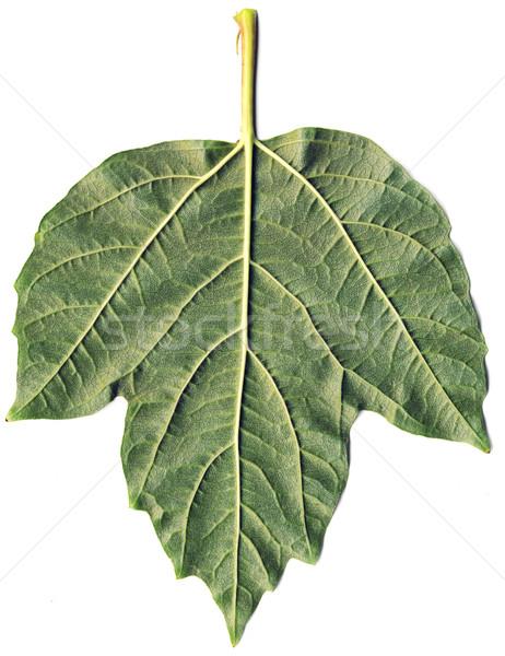 Liści powierzchnia zielony liść trawy streszczenie Zdjęcia stock © pzaxe