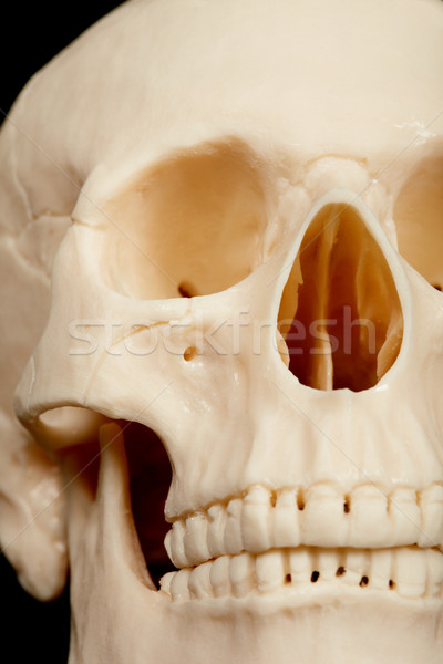 Human skull closeup Stock photo © pzaxe