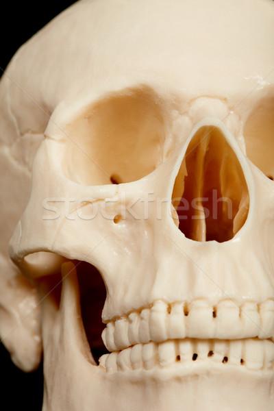 Emberi koponya közelkép elöl halál fogak Stock fotó © pzaxe