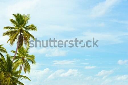 Kókusz pálmafák kék ég üres hely szöveg erdő Stock fotó © pzaxe