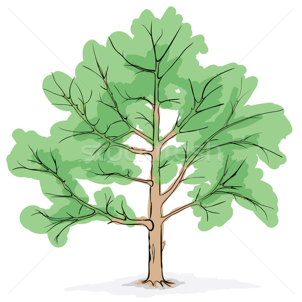 Simplifiée image arbre grand vecteur dessin Photo stock © pzaxe
