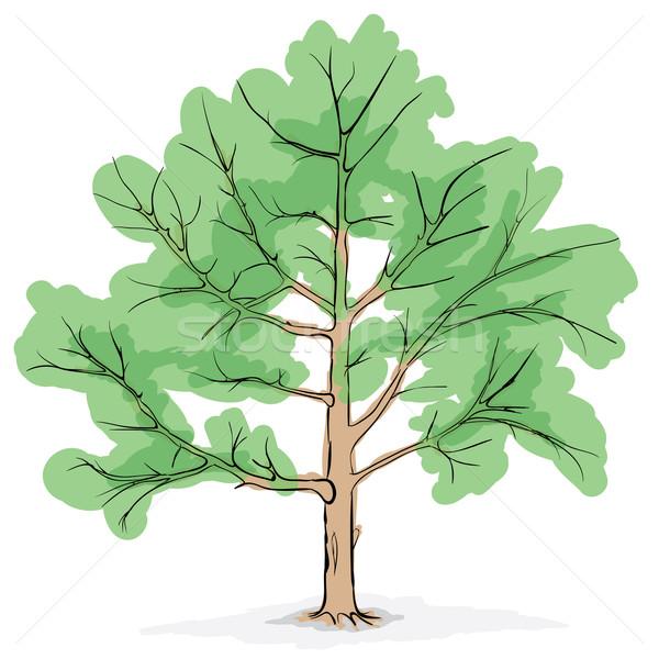 Egyszerűsített kép fa nagy vektor rajz Stock fotó © pzaxe