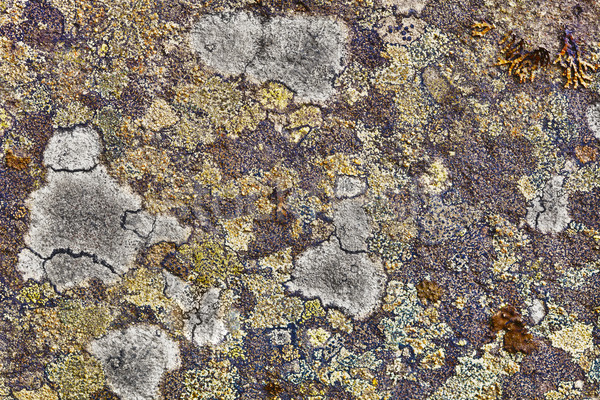 Granite rocks covered with lichen Stock photo © pzaxe