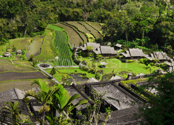 Asia. View of the rice plantations Stock photo © pzaxe