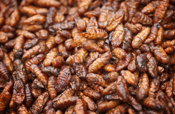 Fried in oil silkworm larvae Stock photo © pzaxe