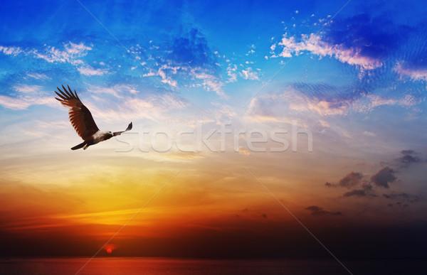 Uccello preda kite battenti bella tramonto Foto d'archivio © pzaxe