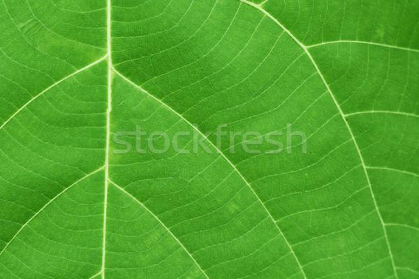 Yüzey yeşil yaprak damarlar doku ağaç çim Stok fotoğraf © pzaxe