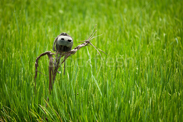 Scarecrow on rice field Stock photo © pzaxe