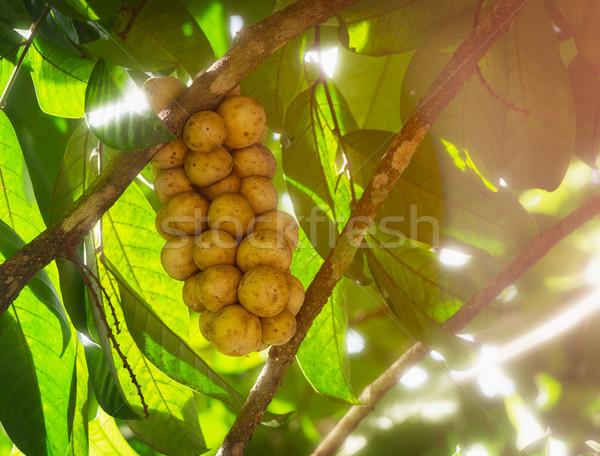 Fraîches tropicales fruits Thaïlande délicieux sweet Photo stock © pzaxe