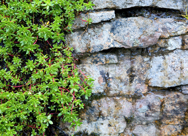 Rock covered with green exotic vegetation Stock photo © pzaxe