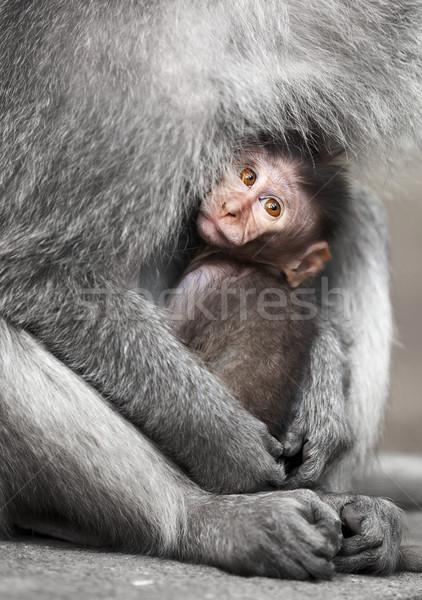 カブ 母親 腕 家族 赤ちゃん 顔 ストックフォト © pzaxe