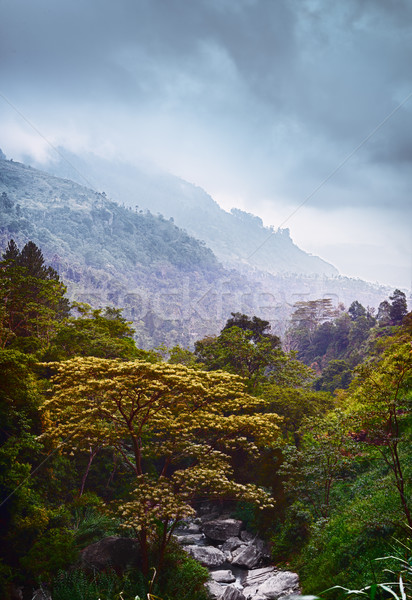 Dramatic vertical landscape. Forest and Stream Stock photo © pzaxe