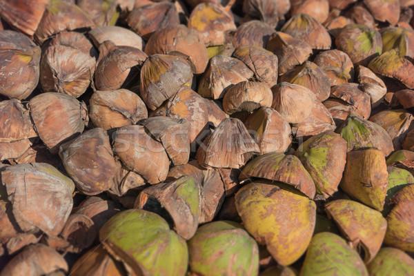 Pile of broken coconut husks Stock photo © pzaxe