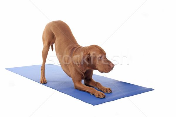 downward dog Stock photo © Quasarphoto
