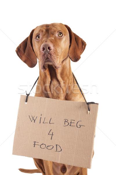 Köpek altın renk karton Stok fotoğraf © Quasarphoto